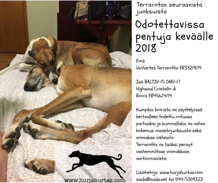 terra_rokka_pentueilmoitus